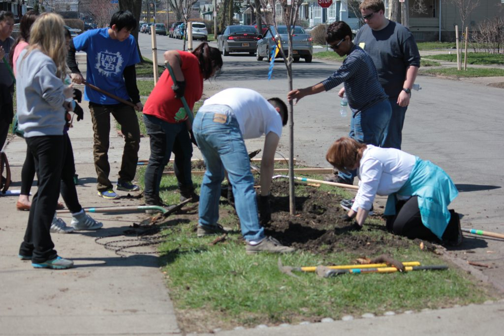 UB Students work with a resident to backfill their newly planted tree